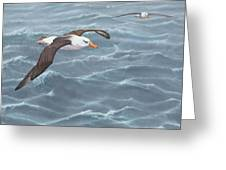 Ocean Flight Seabirds By Alan M Hunt Greeting Card