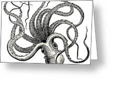 Octopus Octopus Vulgaris - Vintage Greeting Card