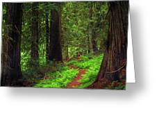 Old Growth Cedars Greeting Card