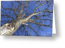 Old Oak Tree Greeting Card