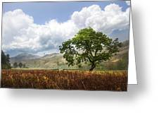 Old Scottish Farmlands Under The Clouds Greeting Card