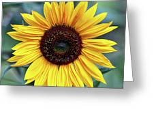 One Bright Sunflower Greeting Card