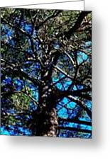 One Large Pine Photograph By Uther Pendraggin