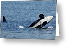 One Orca Leaping Greeting Card