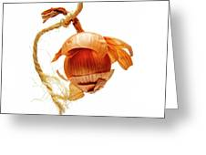 Onion On A White Background Greeting Card