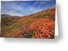 Oodles Of Poppies Fill The Walker Canyon Of Lake Elsinore, Calif Greeting Card