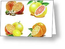 Orange Grapefruit Lemon Watercolor Fruit Illustration Greeting Card