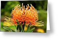 Orange Protea Greeting Card