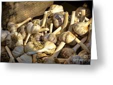 Organic Garlic Greeting Card