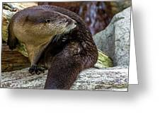 Otter Interrupted Greeting Card by Kate Brown