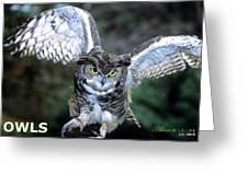 Owls Mascot 2 Greeting Card