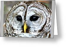 Owls Mascot Greeting Card