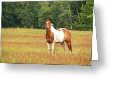 Paint Horse In Meadow Greeting Card