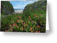 Paintbrush And Ice Plant, Garrapata Greeting Card