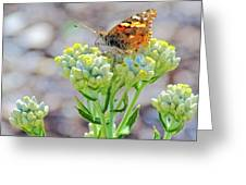 Painted Lady Butterfly Up Close In Rancho Santa Ana Botanic Garden In Claremont-california Greeting Card by Ruth Hager