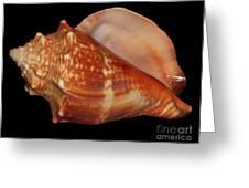 Painted Shell No. 9 Greeting Card