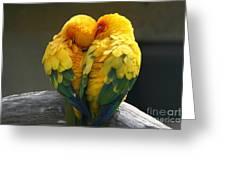 Pair Lovebirds Greeting Card