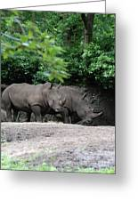 Pair Of Rhinos Standing In The Shade Of Trees Greeting Card