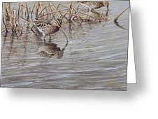 Pair Of Snipe By Alan M Hunt Greeting Card