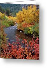 Palisades Creek Canyon Autumn Greeting Card