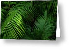 Palm Saturday Greeting Card