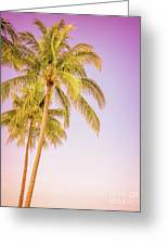 Palm Trees And Pink Sky Greeting Card