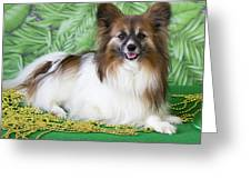 Papillon On Green Greeting Card