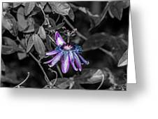 Passion Flower Only Alt Greeting Card