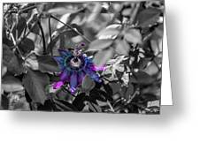 Passion Flower Only Greeting Card