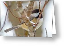 Peaceful Winter Chickadee  Greeting Card