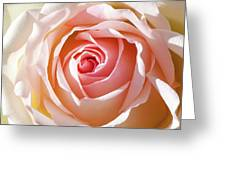 Soft As A Rose Greeting Card