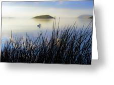 Pelican On Klamath Lake Greeting Card