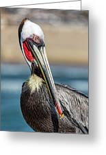 Pelican Pose Greeting Card