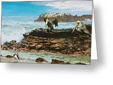 Pelicans At Laguna Beach 3 Greeting Card
