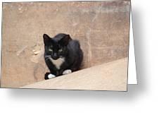 Pharaoh Cat Greeting Card