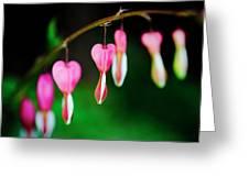 Phlebotomizing Coronary Greeting Card