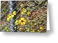 Phoenix Arizona Papago Park Blue Sky Red Rocks Scrub Vegetation Yellow Flowers 3182019 5327 Greeting Card