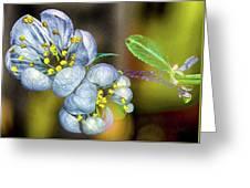 Photinia Spring Greeting Card