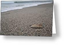 Pier Seashell Greeting Card