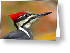 Pileated Woodpecker, 9118 Greeting Card