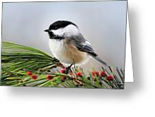 Pine Chickadee Greeting Card