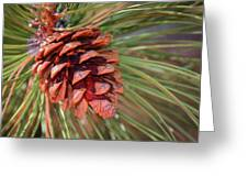 Pine Cone Greeting Card by Patti Deters