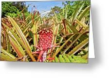 Pineapple Plant Ananas Pico Island Azores Portugal Greeting Card