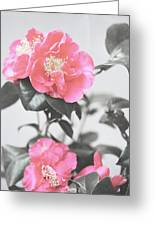 Pink Camellia. Shabby Chic Collection Greeting Card