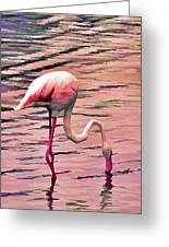 Pink Flamingo Two Greeting Card