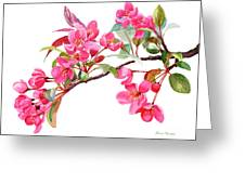 Pink Flowering Tree Blossoms Greeting Card