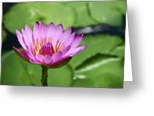 Pink Lotus Water Flower Greeting Card