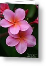 Pink Plumerias  Greeting Card