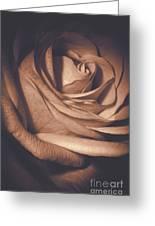 Pink Rose Petals 0219 Greeting Card