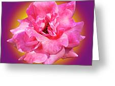 Pink Rose With Background Greeting Card by Howard Bagley